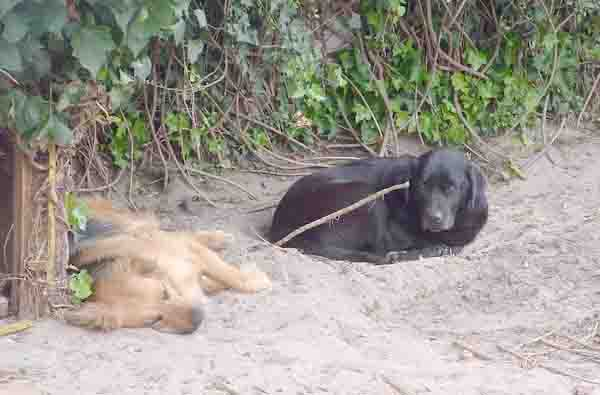 digging dogs